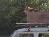 Dog_Car_20061